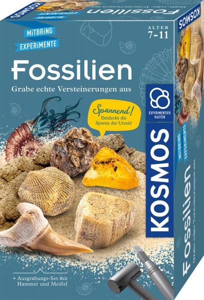 Fossilien1.jpg
